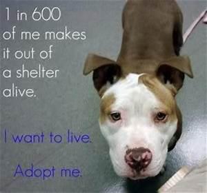 help protect animals