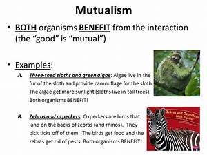 Symbiotic Relationships - ppt download