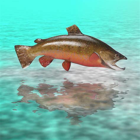 Bid Fish New Technology Bigfish