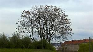 Immergrüne Sträucher Und Bäume : b ume und str ucher berwintern gartennatur ~ Michelbontemps.com Haus und Dekorationen