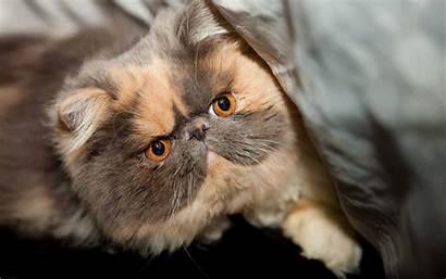 Fat Wallpapers Cats Cat