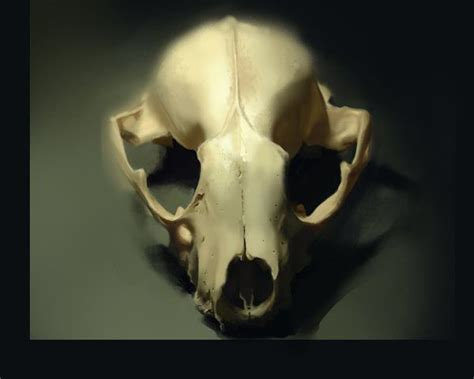 17 Best Images About Skulls (killer And Non-killer) On