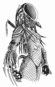 Predator Female!!! This is amazing!!!!! What an awesome ...