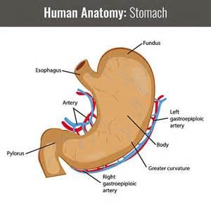 Cincinnati Children U0026 39 S Hospital Medical Center Grow Stomach