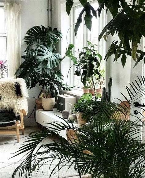 ideas   create   indoors jungle plant