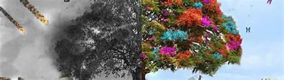 Nature Wallpapers Negative Positive Background Screen Desktop