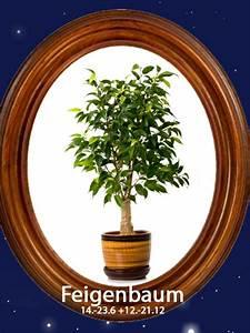 Baumhoroskop Berechnen : das gro e baum horoskopfeigenbaum 14 bis 23 6 12 bis ~ Themetempest.com Abrechnung