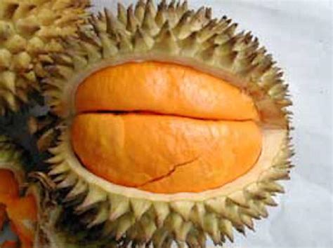 buah lai  kuning atraktif  mirip durian