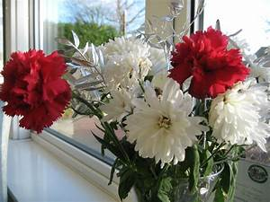 Red and white flowers | Plant-Lore