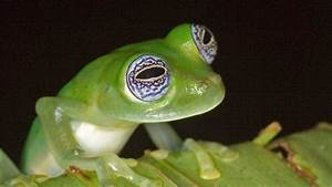 Frogs: The Thin Green Line - National Geographic Channel ...