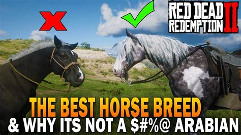 rdr2 horse horses arabian dead redemption breed why