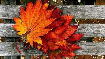 Autumn Wallpapers Nature