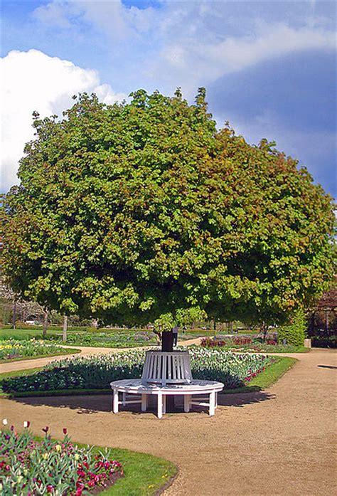 Botanischer Garten Bochum Kinder by Kugelahorn Und Rundbank 183 Stadtpark G 252 Tersloh