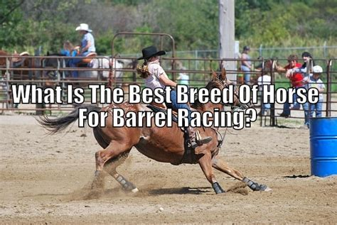 barrel horse breed racing picking horses race fast rise figures cost six them into