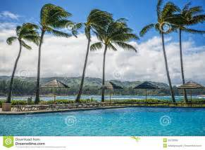 palm trees in wind oahu hawaii stock photography image 29722582