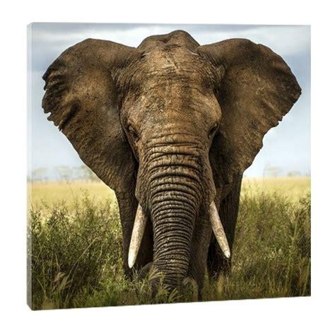 nouveauté cuisine tableau photo tête d 39 eléphant