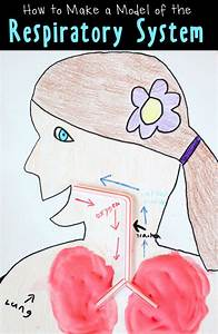 Human Body Activities  Respiratory System Model