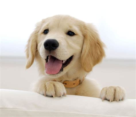 pro dog school