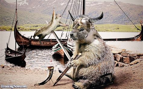funny viking pictures freaking news