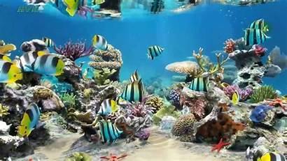 Aquarium Desktop Wallpapers Laptop Sim Windows Wallpapersafari