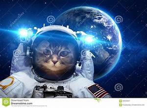 Beautiful Cat In Outer Space Stock Image - Image: 59553047