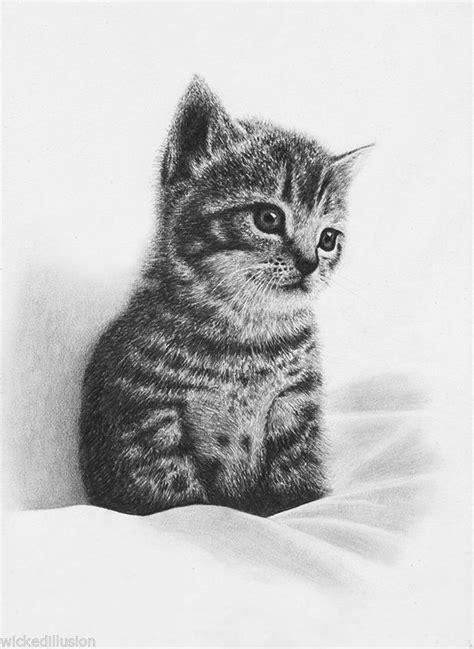 pet portrait kitten original graphite pencil drawing cute
