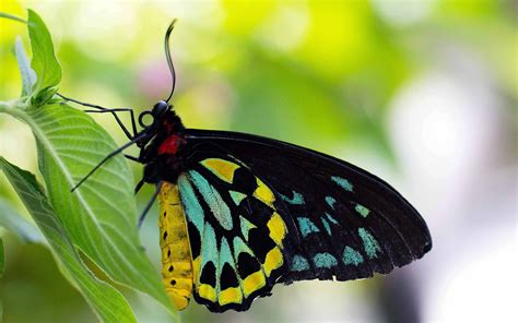 butterfly latest high quality wallpapers hd wallpapers rocks