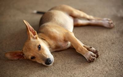 Upholstery Cleaning Los Angeles Ca by Green Clean Pet Stain And Odor Removal Los Angeles The