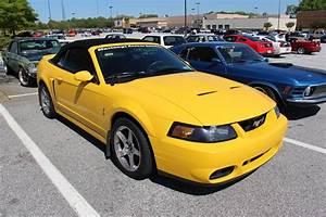 2001 Ford Mustang SVT Cobra - Coupe 4.6L V8 Manual