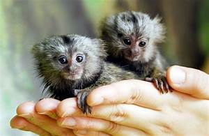 5 Cute Amazon Rainforest Monkeys | Cute Animals ...