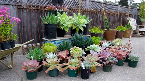 succulent plants and flowers tope s sustainable garden
