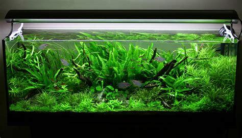 small fish for aquarium decorations small fish tank fish tank decor ideas fish supplies petsmart fish marineland