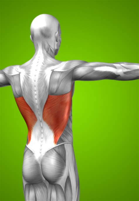 Knowing Your Core Muscles-Lats | The Weekly Post
