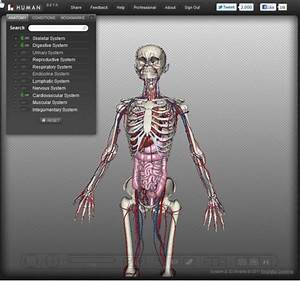 Biodigital Human  3d Human Body Anatomy And Conditions Guide