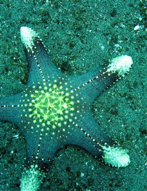 images  star fish starfish sea star