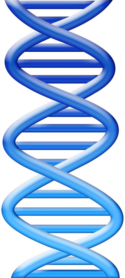 free clipart library free dna cliparts free clip free clip