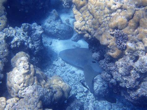 Requin Dormeur by Rangiroa Requin Dormeur