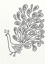 Peacock Coloring Colouring Birds Pdf sketch template