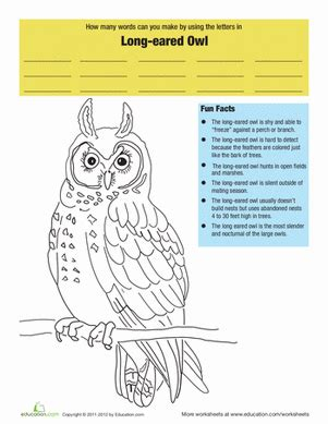 eared owl facts worksheet education