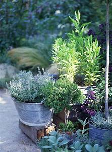How To Grow A Basic Container Garden