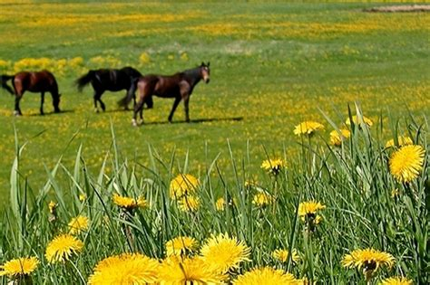 Mājdzīvnieks - zirgs. Arī pilsētniekam!
