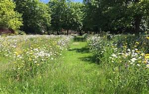 Que Planter En Juin : que faire en juin au jardin fiche jardinage greenastic ~ Melissatoandfro.com Idées de Décoration