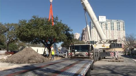 Trees Being Relocated To Hemisfair