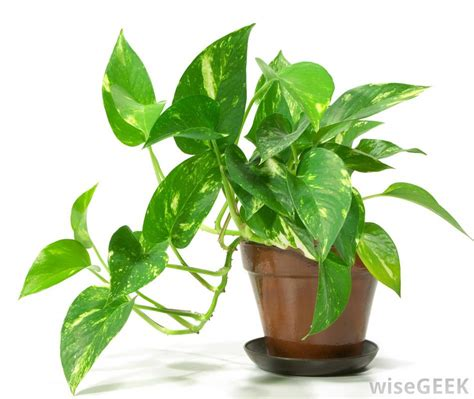 potted plant what are the best tips for potting plants with pictures