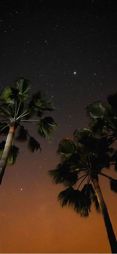 Iphone Wallpapers Coconut Trees Aesthetic Nighttime Three