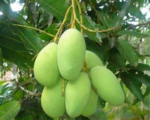Every Day.... A New Beginning: Perfect March : Green Mango ...
