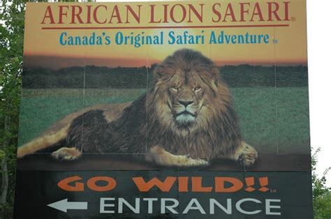meet wild animals  canadas african lion safari