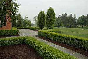 Formal Bluestone Terrace with Boxwood Hedge - Traditional