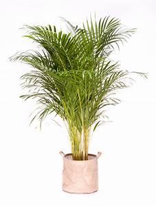 Plante D Intérieur : grande plante d int rieur facile d entretien l 39 atelier ~ Dode.kayakingforconservation.com Idées de Décoration