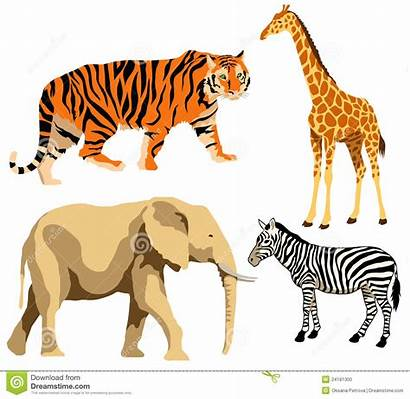 Clipart Animals African Clip Animal Exotic Cliparts